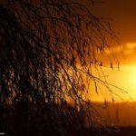 Birke Sonnenuntergang